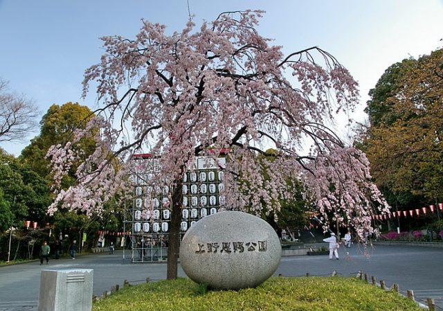 清晨的上野公園,擁抱賞櫻季前寧靜的一刻 | 林氏璧和美狐團三狐的小天地