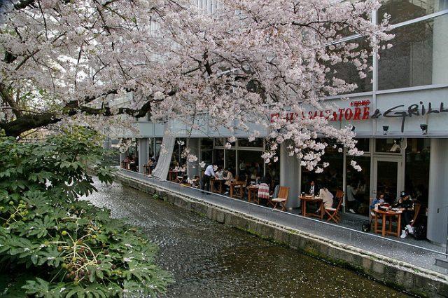 木屋町通/高瀨川櫻吹雪: 內行人的京都賞櫻景點 | 林氏璧和美狐團三狐的小天地