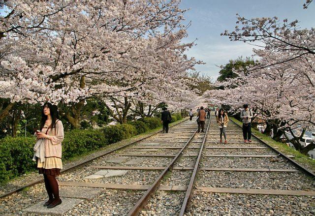 蹴上傾斜鐵道,琵琶湖疏水(岡崎疎水)的美麗櫻花 | 林氏璧和美狐團三狐的小天地